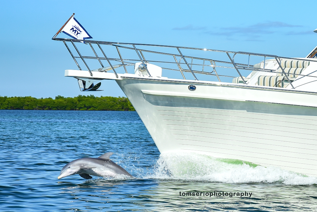 YF - Dolphin DSC_3916 2.jpg