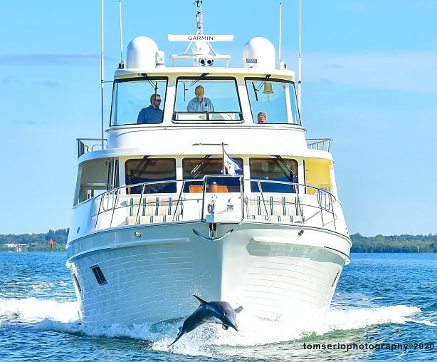 YF - Dolphin DSC_3925 2.jpg